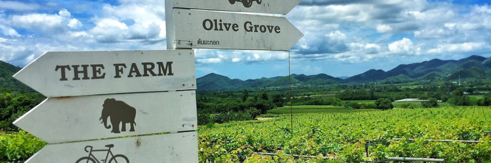 Hua Hin Hills Vineyard, Moonson Valley